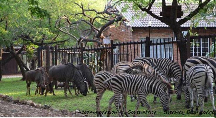 Nature at your doorstep. Getaway Bush Self Catering House.