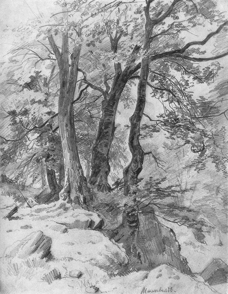 Дерево в лесу рисунок карандашом