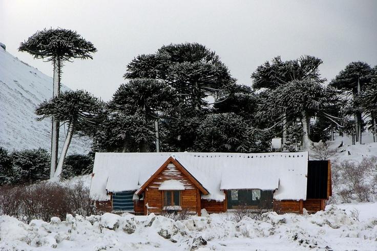 Temporada a pura nieve — Revista Contraseñas