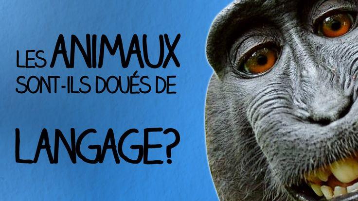Les animaux sont-ils doués de langage? - Ma Langue dans Ta Poche #4