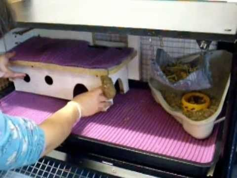▶ Jaula casera cobaya con mueble tv / Guinea pig cage with tv cabinet - YouTube