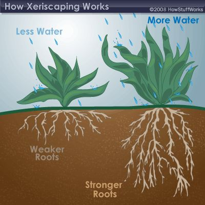 Although plant selection is important, many people aren't aware of how necessary proper soil preparation is to a Xeriscaping project. The right kind of soil will keep plants cool, refrain from evaporating water and retain any excess moisture.