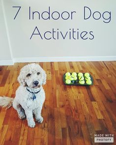 7 Indoor Dog Activities! Great for rainy fall and winter days.  Fun ideas to keep your puppy stimulated and having fun inside. Help your pup use up some energy when you can't spend as much time outdoors. Easy to do and fun for the whole family!