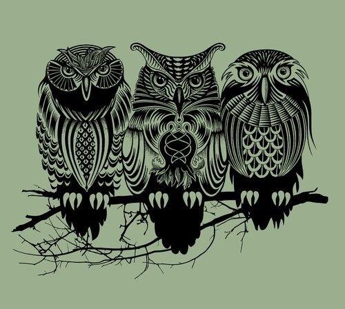 Owls of the Nile | Rachel Caldwell