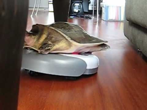 Roomba giving a piggy back ride to a turtle.