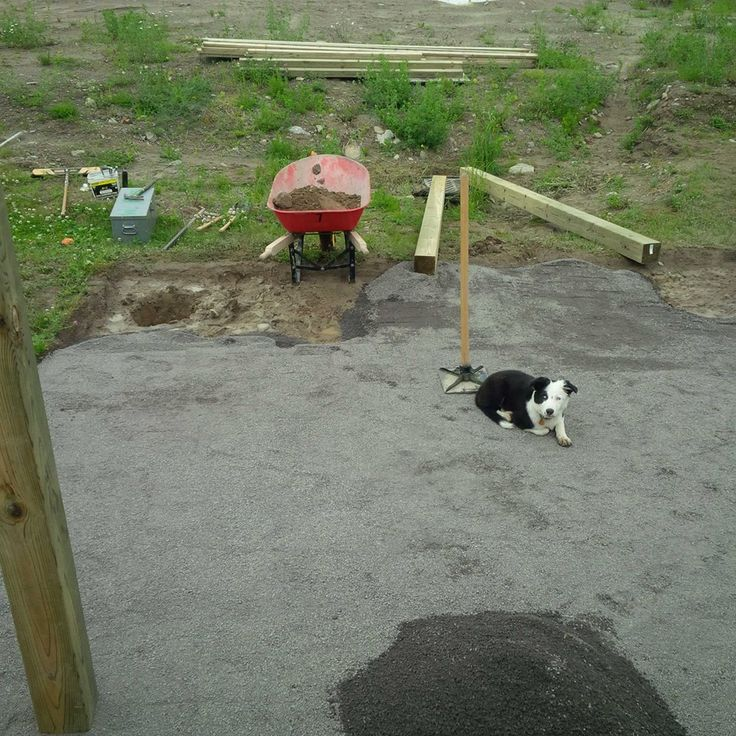 Here Piper is supervising my landscaping skills, checking to see the grade on the screenings.