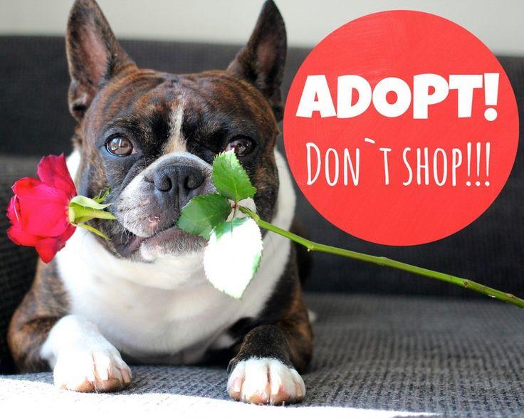 ADOPT! Don´t shop!!!