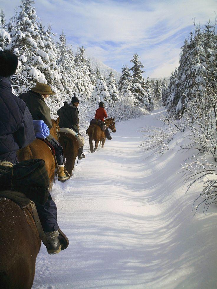 A cheval dans les forêts enneigées du Québec #hiver #canada