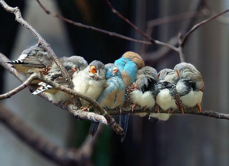 loveTalk Head, Pixar Shorts, Owls Baby, Beautiful Birds, Families, Angry Birds, Crui Line, Feathers Friends, Animal