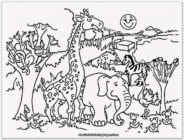 Online Coloring Zoo Animals : 82 best coloring pages images on pinterest