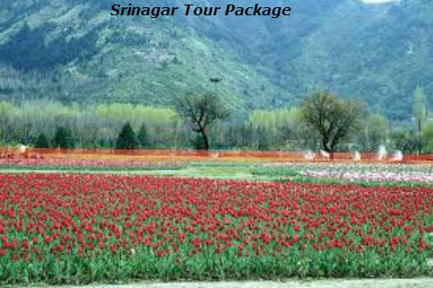 Get experience of memorable trip of Srinagar provided by Shine India Trip. They offer best Srinagar tour package and many more tour packages at very affordable cost.