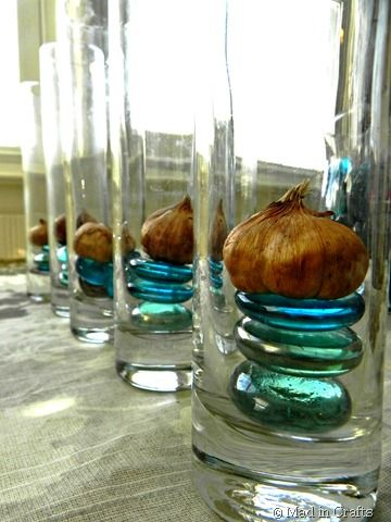forcing bulbs (without special vases)