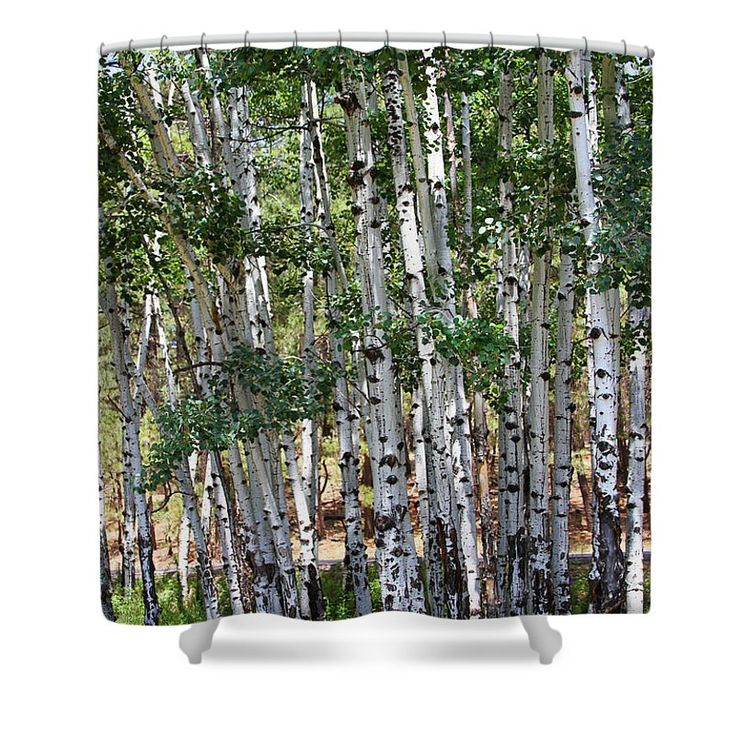 "Arizona Aspen Trees Shower Curtain by Tom Janca.  This shower curtain is made from 100% polyester fabric and includes 12 holes at the top of the curtain for simple hanging.  The total dimensions of the shower curtain are 71"" wide x 74"" tall."