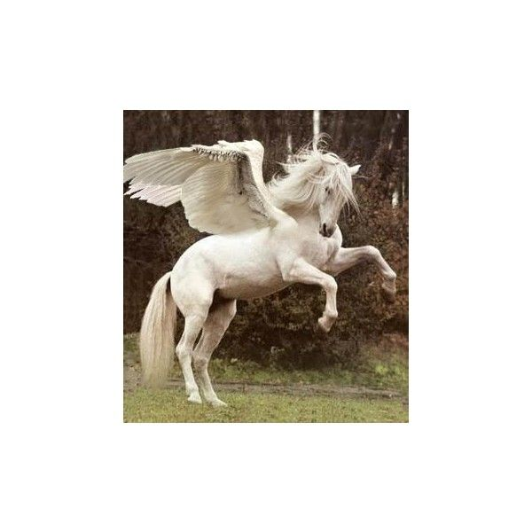 Pegasus Things that I love ❤ liked on Polyvore featuring animals, pictures, backgrounds, fantasy, percy jackson, saying, quotes, phrase, filler and text