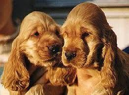 cachorros tiernos - Buscar con Google