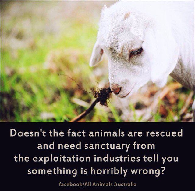 best 25  animal rescue quotes ideas on pinterest