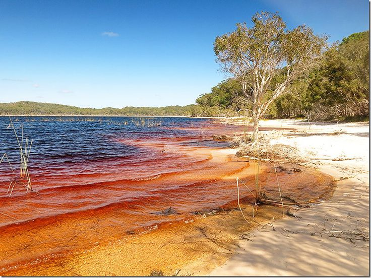 Exploring the Inland tracks of Fraser Island! Photo is of Lake Boomanjin! Click to read the post on our blog.