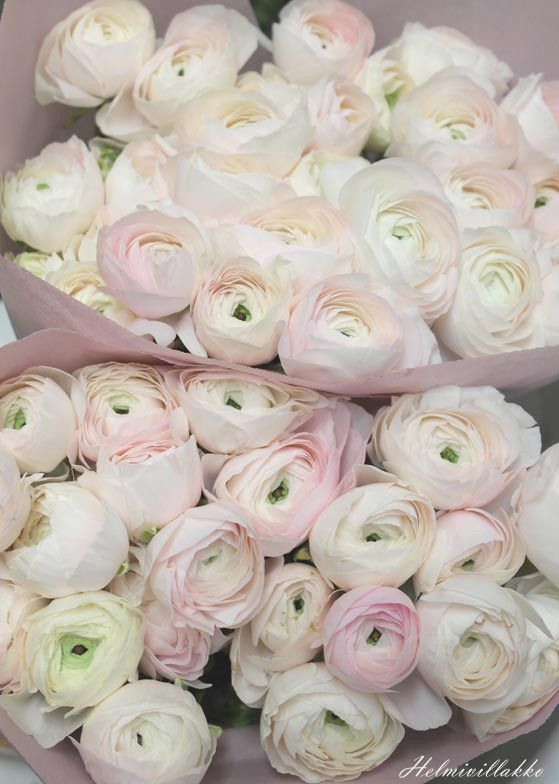 'Clooney Hanoi' ranunculus - just gorgeous!!                                                                                                                                                                                 More