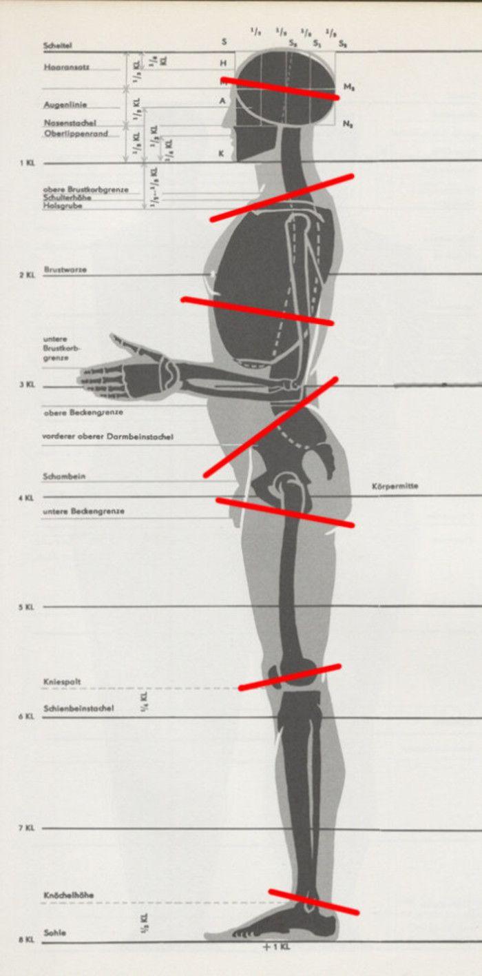 C.为了克服重力,Z字形在人体体块的横断面上也有许多显现。人体直立时,从侧面看,头颅部分的横断面是前高后低、颈部和胸腔上沿的横断面是前低后高、胸腔下沿的横断面是前高后低、盆腔上沿的横断面是前低后高、大腿上沿的横断面前高后低、膝关节的横断面是前低后高、踝关节的横断面是前高后低,这样就形成了不连贯的Z字形。