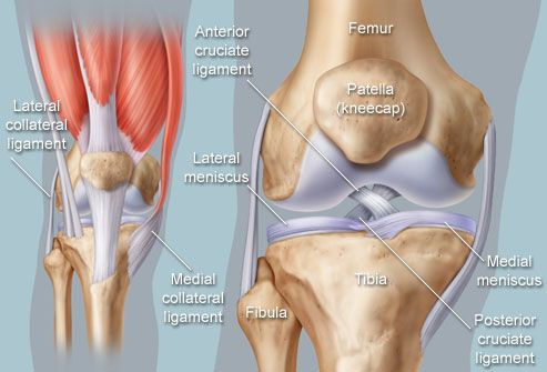 Anatomical illustration of knee; article includes knee conditions such as osteoarthritis, fluid buildup (effusion), meniscal tear, ACL, MCL, PCL, patella tendonitis, bursitis, rheumatoid arthritis, gout.