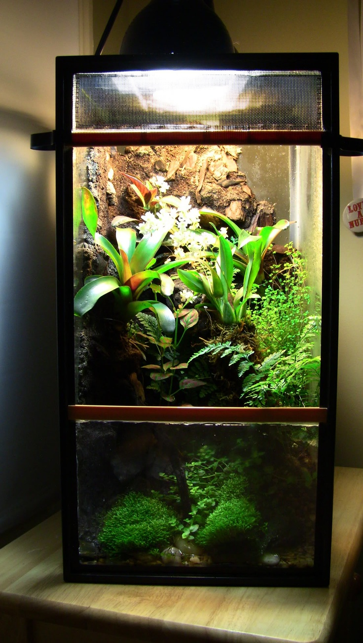 77 best fire bellied toads mik and ody images on for Fish tank terrarium