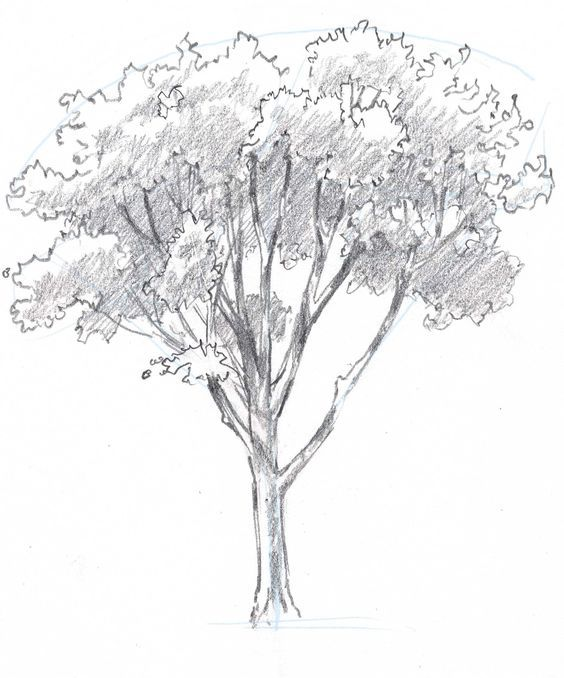 25 best how to draw trees ideas on pinterest trees for Best tree drawing