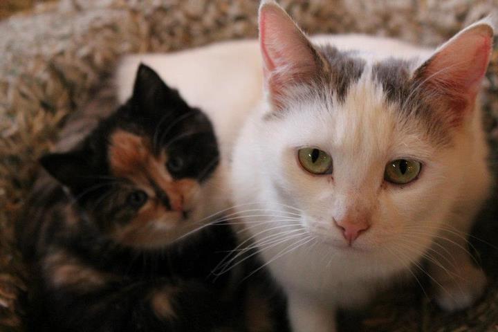 Pumpkin with her kitten