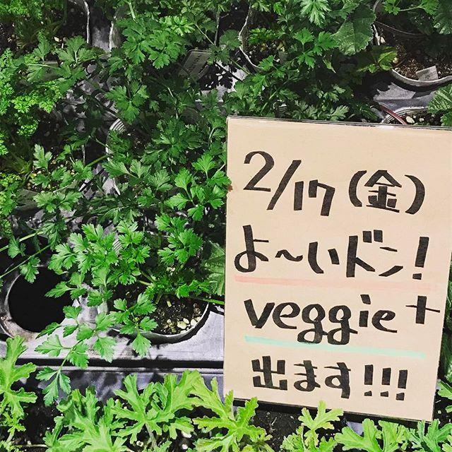 【veggieplus】さんのInstagramをピンしています。 《『よ~いドン!』明日2月17日(金)関西テレビのよ~いドン!にveggie+が出ます(。-∀-)ノお時間ある方は見たってくださいませ♪(≧▽≦)…なんか恥ずかしい(〃ノωノ)#大阪#天王寺#赤松種苗#グリーン#観葉植物#veggie#ベジープラス#veggieplus#多肉植物#サボテン#鉢#ハーブ#緑#水耕栽培器#園芸雑貨#エアープランツ#プリザーブドフラワー#テラリウム#鉢花#関西テレビ#よ~いドン!》