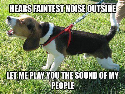beagle humor   beagle hears faintest noise howl