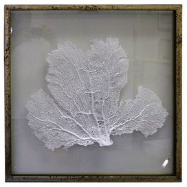 """Mounted and framed sea fan decor with hand-painted detail.  Product: Wall artConstruction Material: Sea fan, glass, and woodColor: Brown frameFeatures:  Hand-paintedFloat mounted between glassReady to hang Dimensions: 23.25"""" H x 23.25"""" W x 1"""" DCleaning and Care: Wipe with cloth"""