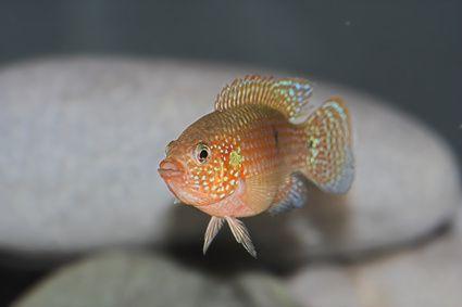 ¿Por qué los peces de agua salada mueren cuando se ponen en agua dulce?  | eHow en Español