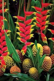 Image result for ginger flower