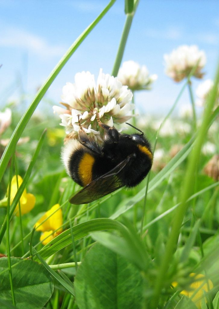"""Bumble Bee - you want to tell it that it cannot fly?  Even though,""""aerodynamically the bee shouldn't be able to fly, but the bumblebee doesn't know that, so it goes on flying anyway"""""""