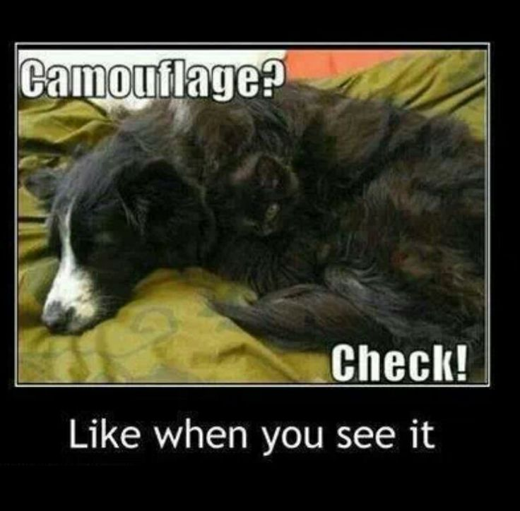 Camouflage Can You See It It Pinterest