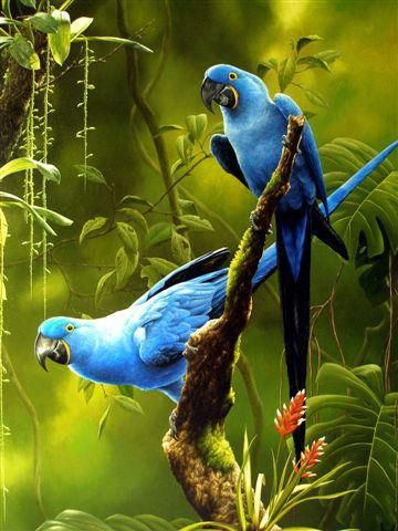 Exotic Birds - blue macaws. Follow and rate our work at http://www.teacherspayteachers.com/Store/Teachers-Plus, as well as for updates on more innovative, timely, and undeniably required studies for the next generation of leaders.