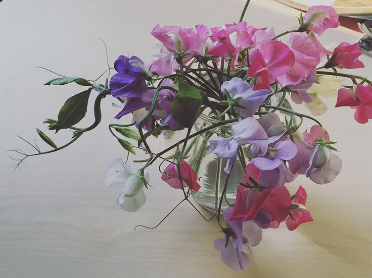 Think ahead to summer and buy a packet of sweetpea seeds. Follow the instructions for your climate zone and look forward to enjoying a bouquet of sweet peas.