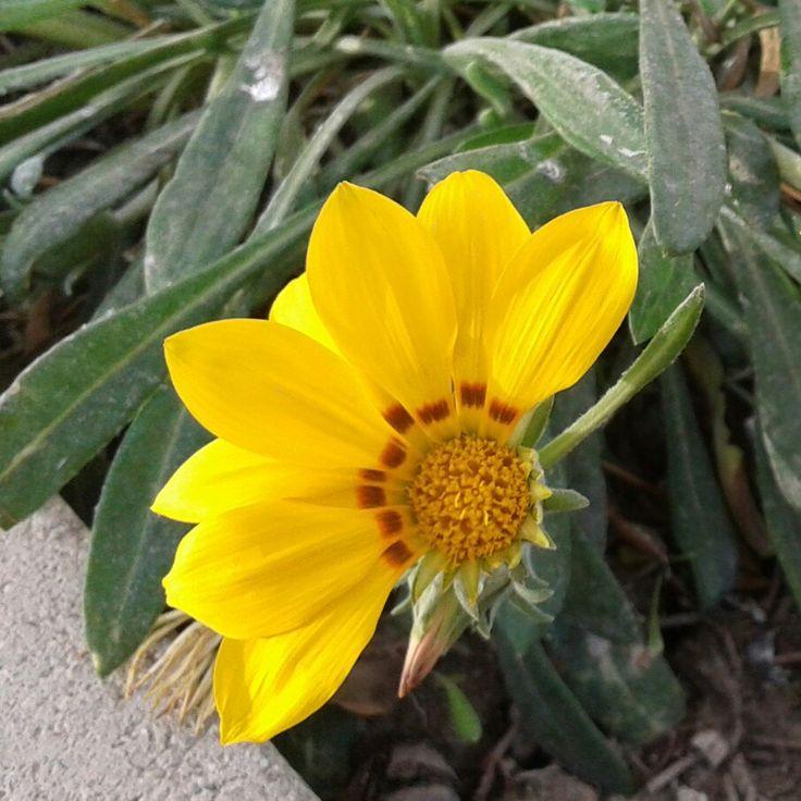 #flowers #çiçek #sarı #yellow