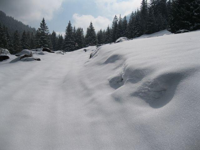 Percorso su neve (Foto di M.Canziani) utilizzato dai ricercatori dell'Associazione Uomo e Territorio Pro Natura come transetto per il monitoraggio di Orso bruno e Lupo nel Parco dell'Adamello e nelle aree limitrofe (www.uomoeterritoriopronatura.it).
