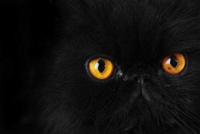 Zwarte katten - Rex Features