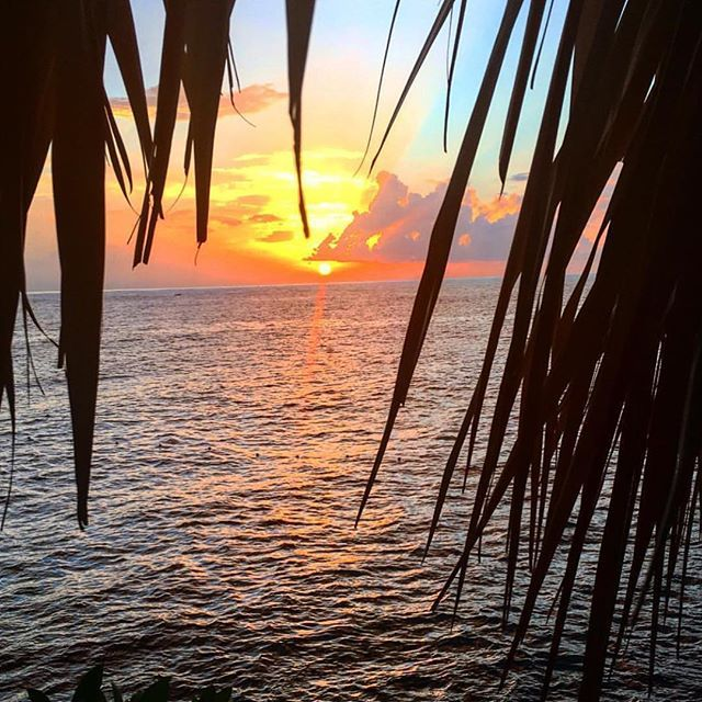Our stores are closed today due to the frigid Artic weather here in NYC. Gives us a little time to relax and think of paradise!  #tropical #paradise #travelphotography #travelblog #traveling #traveller #jamaica #caribbean #warmweather #sunshine #sunrise #sunset #sun #horizon #golden #palmtrees #relaxation #vacation #funinthesun #winter2016 #frozen #nature #seaside #seashore #sea #swim #waves #weekend #saturday #waterfoam