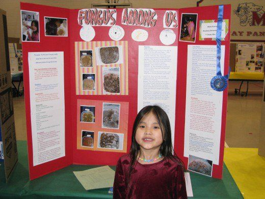 Science Fair Board:  Fungus Among Us!  Cute titles catch the judges eye.  Notice that the pictures are a little crooked.  Mollie pasted everything herself.  Judges like it when it seems the kid had really done the project.