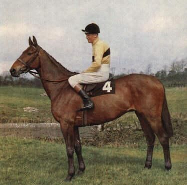 1970 famous horse | Arkle won 27 of his 35 starts and won at distances from 1m 6f up to 3m ...