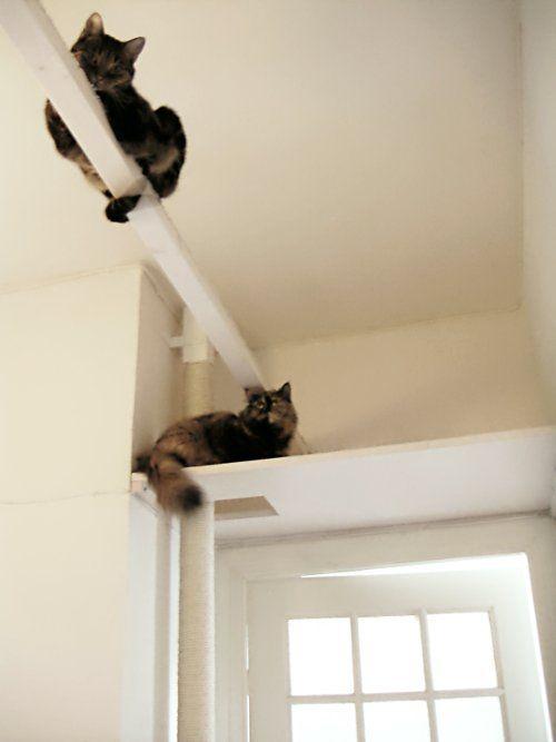 cats walkway