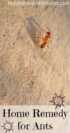 ameisen im wohnzimmer inspirierende abbild und ceeecffedcf ant home get rid of ants