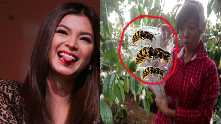 The girl looked like angel locsin joins the challenge catch 100 bees and...