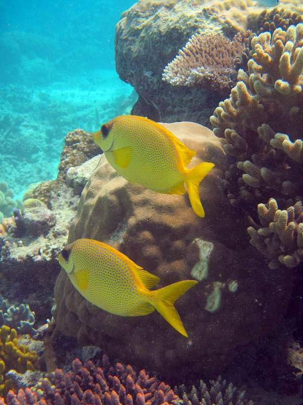 Find pricing information for your Great Barrier Reef adventure with the number 1 tour operator in Port Doulgas using the Wavelength simple and easy reservation system.