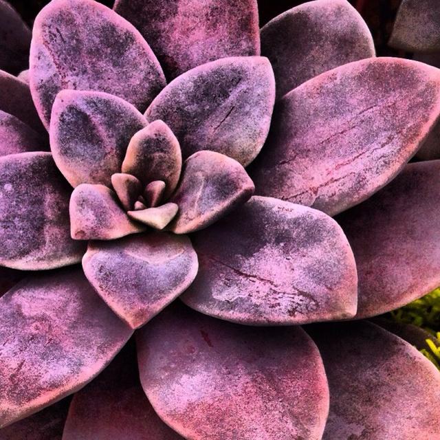 Rojas Succulents- Fallbrook, Ca
