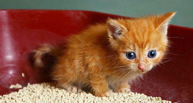 Steps To Train Kittens Not To Bite Panosundaki Pin