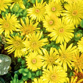 Find This Pin And More On Plants Ground Cover
