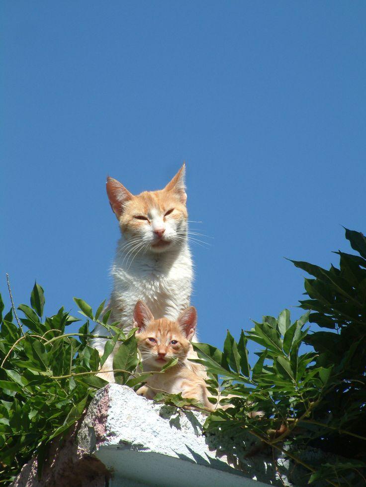 LESBOS-CATS